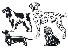Breeds of dogs. Isolated on white illustration Stock Photography