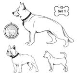 Breeds of dogs set royalty free illustration