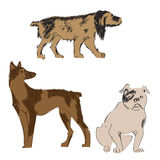 Breeds of dogs set, sketch, hand drawn illistration Stock Photography