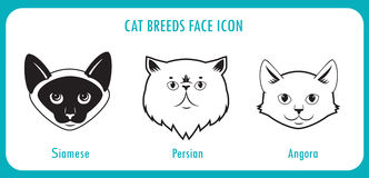 Cat breeds face icons. Angora, persian, siamese. Stock Photos