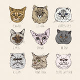 Breeds. Siamese, British, Siberian, Persian, Scottish Fold, Maine Coon, Bengal, Sphynx. Set of cats in doodle hipster vintage style Royalty Free Stock Images