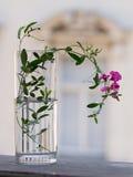 Breekbare Roze Bloem in Vaas Stock Fotografie