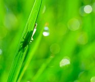 Breen grass background Stock Photos