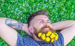 Breezinessbegrepp Grabb med maskrosor i skägg som kopplar av, bästa sikt Den skäggiga mannen med maskrosblommor i skägg lägger på arkivbilder