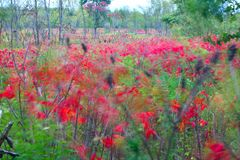 Breezy Fall Day - Illinois. Fall foliage sways in the wind at Kishwaukee Gorge Forest Preserve - Illinois Stock Image