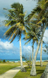 A Breezy Tropical Day. A picture of palm trees blowing in the wind at a beach in Guam Royalty Free Stock Image