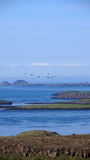 Breidafjördur Islands. View over Breidafjördur islands with birds flying over royalty free stock images