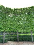 Breitbild von grünen Blättern Stockfotografie