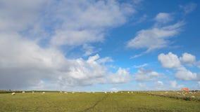 Breite Ansicht über niederländische Landschaft mit Schafen, Wiese und bewölkten Himmeln Lizenzfreies Stockfoto