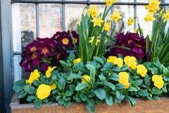 Breite Ansicht des Blumenkastens stockfoto