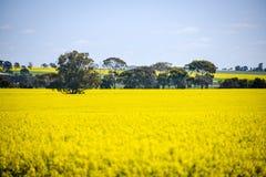 Breite Ansicht des Canolafeldes im Barossa Valley, Süd-Australien lizenzfreie stockfotos
