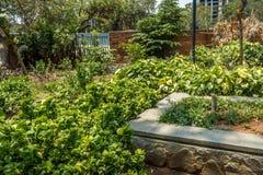 Breite Ansicht des grünen Gartens mit Gras, Bäumen, Anlagen, Schatten und Bahn, Chennai, Tamil Nadu, Indien, am 29. Januar 2017 Lizenzfreie Stockbilder