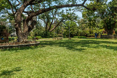 Breite Ansicht des grünen Gartens mit Gras, Bäumen, Anlagen, Schatten und Bahn, Chennai, Tamil Nadu, Indien, am 29. Januar 2017 Lizenzfreie Stockfotos