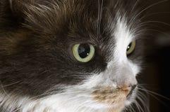 Breite gemusterte Katze Stockfotos