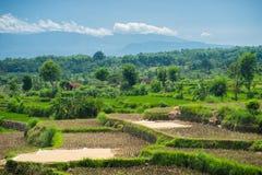 Breite grüne Reisterrassen bei Bali Lizenzfreie Stockbilder