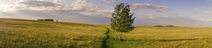 Breite panoramische Landschaft und lokalisiertes Baum-Nasen-Hügel-Park-Grasland-Gras Alberta Foothills stockbilder