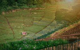 Breite Perspektive von kultiviert archiviert auf den Hügeln mit Kopie spac stockfotos