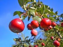 Breiten Sie sich mit Äpfeln auf den Skylinen aus Lizenzfreie Stockbilder