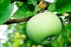 Breiten Sie sich mit Apfel aus Lizenzfreies Stockbild