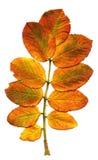 Breiten Sie sich mit Blättern aus stockbilder