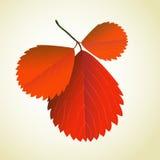 Breiten Sie sich mit Blättern unten aus Lizenzfreie Stockfotos