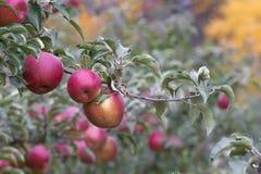 breiten Sie sich mit Früchten aus Lizenzfreie Stockfotos