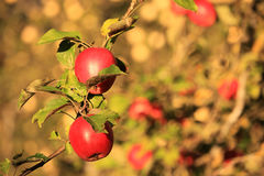 breiten Sie sich mit Früchten aus Lizenzfreies Stockfoto