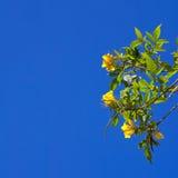 Breiten Sie sich mit gelben Blumen aus Lizenzfreie Stockbilder