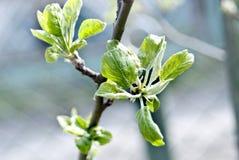 Breiten Sie sich mit grünen Blättern aus Lizenzfreie Stockbilder
