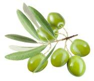 Breiten Sie sich mit grünen Oliven aus Stockbilder