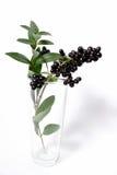 Breiten Sie sich mit schwarzen Beeren im Vase aus Stockfotos