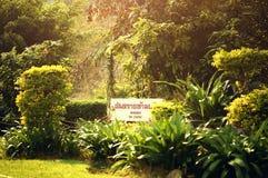 Breiter grüner Dschungel lizenzfreie stockfotos
