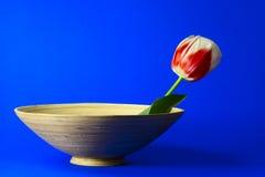 Vase und Tulpe stockfoto