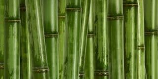 Breiter harter Bambushintergrund lizenzfreie stockfotos