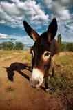 Breiter Schuss eines Esels, einen Schatten werfend Stockfotos