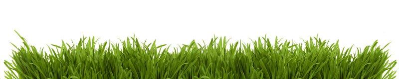 Breites Bild eines frischen Frühlingsgrases Stockfotografie