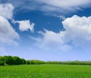 Breites Feld des grünen Grases, des Waldes und des blauen Himmels mit Wolken Lizenzfreie Stockbilder