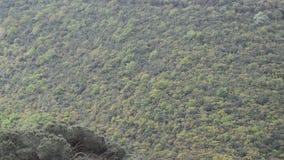 Breites Feld und grüner Wald stock footage