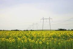 Breites Feld von Sonnenblumen. Das Sommerzeit landsape Lizenzfreie Stockfotos