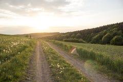 Breites Löwenzahnfeld nahe Sonnenuntergangstraße lizenzfreie stockfotos