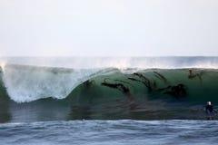 Brekende Golf met Kelp Stock Afbeelding