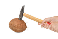 Brekende kokosnoot met een hamer Royalty-vrije Stock Afbeeldingen