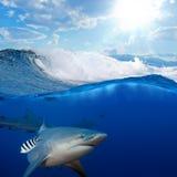 Brekende oceaan in zonlicht en boze haaien Royalty-vrije Stock Foto's