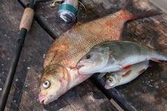 Brema de bronce de agua dulce grande o brema de la carpa, brema blanca o brema, perca y ca?a de pescar de plata con el carrete en foto de archivo