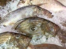 brema de mar de la Cerda-cabeza en el hielo en la exhibición del pescadero Fotos de archivo libres de regalías