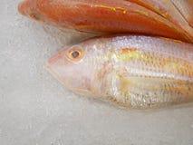 Brema do Threadfin no gelo imagens de stock