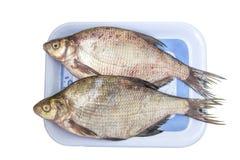 A brema dos peixes crus foto de stock