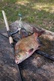 Brema y ca?a de pescar comunes de agua dulce grandes con el carrete en fondo de madera del vintage foto de archivo