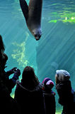 Bremerhaven Zoo. Unknown people through the window staring at the seal. Royalty Free Stock Photo
