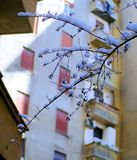 Brench дерева покрытое снег в дворе Стоковые Фотографии RF